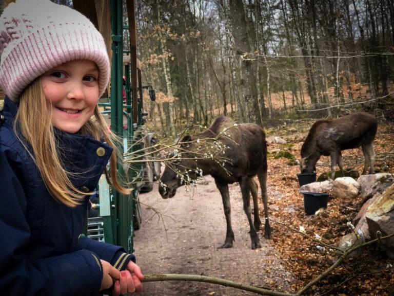 Söderåsens Älgpark har öppnat!
